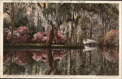 Across the Lake, Magnoila-on-the-Ashley
