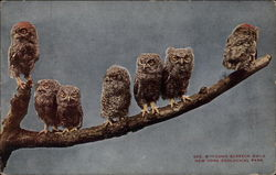 Young Screech Owls, New York Zoological Park Postcard
