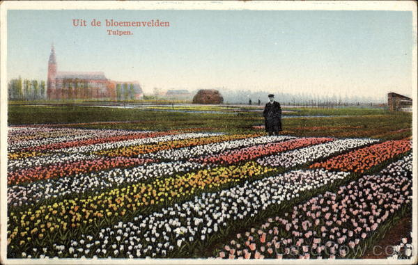 Tulip Fields Netherlands Benelux Countries