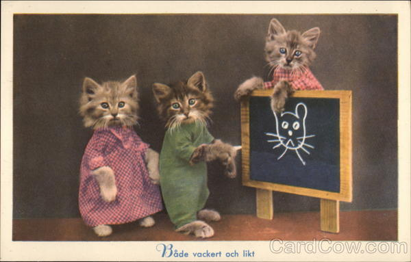 3 kittens at a Chalkboard Sweden