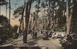 The Pine Walk Postcard
