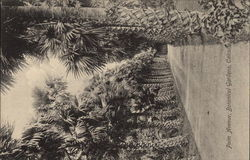 Palm Avenue, Botanical Gardens Postcard