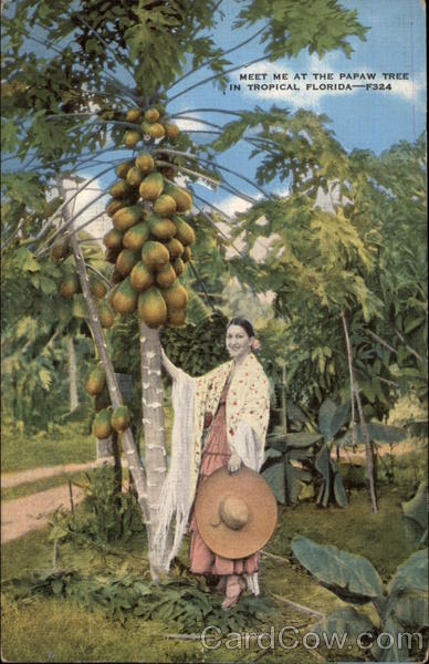 Meet Me At the Pawpaw Tree in Tropical Florida A. Rogers Studio