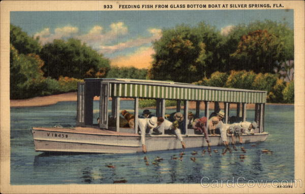 Feeding fish from Glass Bottom Boat Silver Springs Florida