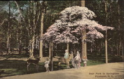 Deer Park in the Springtime