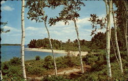 View of Beach and Lake Shore Postcard