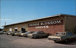 Orange Blossom Groves