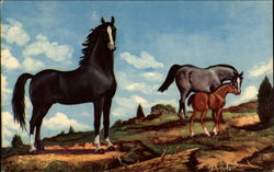 Black Stallion Postcard