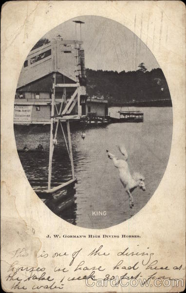 King, JW Gorman's High Diving Horses Atlantic City New Jersey