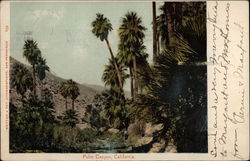 Palm Trees, Palm Canyon