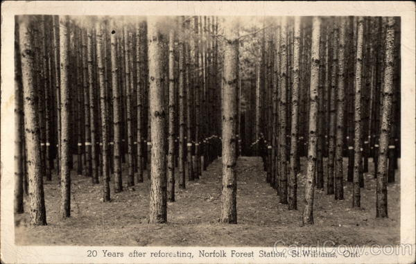 20 Years After Reforesting, Norfolk Forest Station St. Williams Canada