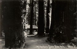 Richardson Grove State Park