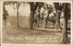 Natural Park, North End of Meads Bridge