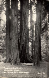 Towering Sentinals, Cathedral Grove