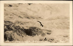 Salmon Jumping Rapids of Columbia River Postcard