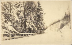Road and pine trees covered in snow
