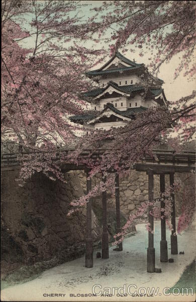 Cherry Blossom and Old Castle Japan