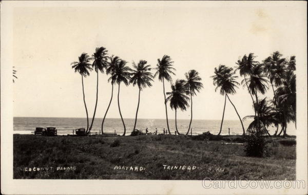 Coconut Palms on Mayaro Beach, Trinidad Trinidad and Tobago