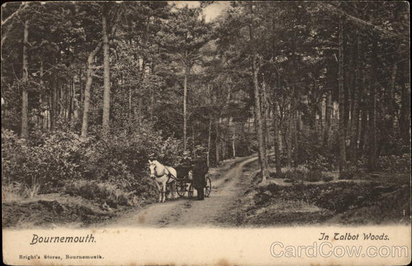 In Talbot Woods Bournemouth England Dorset