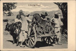 A Hunting Cheetah on a Cart, with Minders