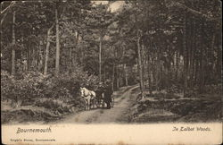 In Talbot Woods Postcard