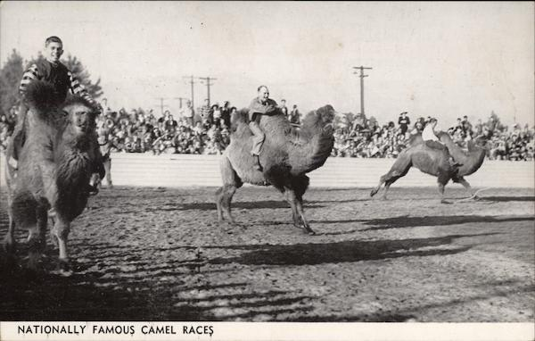 Nationally Famous Camel Races Indio California
