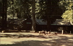 Lodge at Big Basin