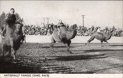 Nationally Famous Camel Races