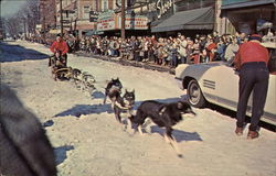 World's Championship Sled Dog Derby
