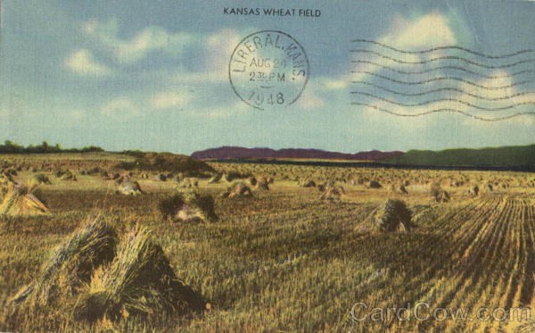 Kansas Wheat Field Scenic