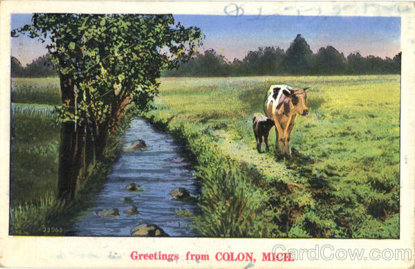 Greeting From Colon Michigan Cows & Cattle