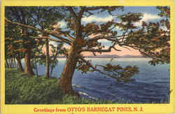 Greetings From Otto's Barnegate Pines