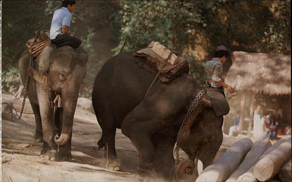 Elephants at Work Chiang Mai Thailand Southeast Asia