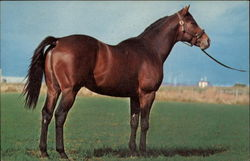 Gallant Man; Big Little Man-TB; Pampa by Fairhaven