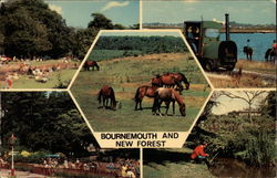 Bournemouth and The New Forest