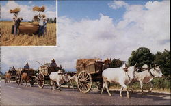 Country Life - Farmers & Oxen