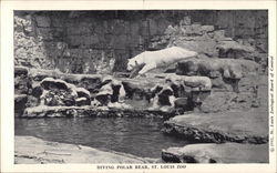 Diving Polar Bear, St. Louis Zoo