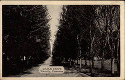 Maple Drive Postcard
