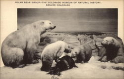Polar Bear Group - The Colorado Museum of Natural History