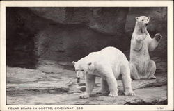 Polar bears in Grotto, Cincinnati Zoo