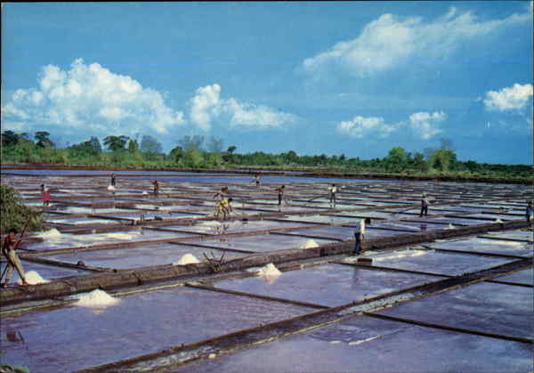 Las Piñas salt bed Las Piñas City Philippines Southeast Asia