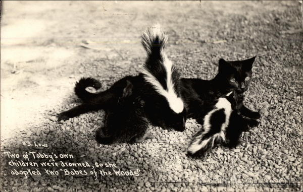 Cat and two skunks Cats