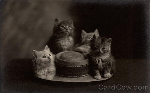 Four Kittens on a Brimmed Hat Cats