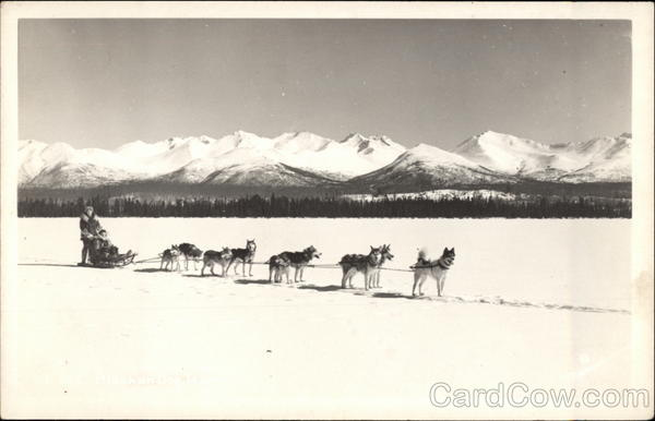 Dog Sled with Snowy Mountain Background