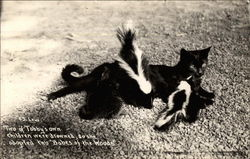 Cat and two skunks