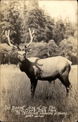 Old Mascot - King of the Elks