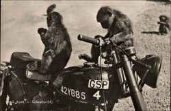 Monkey's on a Motorcycle