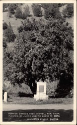 Mother Orange Tree, Planted by Judge Joseph Lewis in 1856, Bidwell Bar Oroville, CA