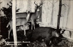 Henkelmann's Museum Wildlife Exhibit with Deer and Small Bear