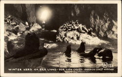 Winter Herd of Sea Lions